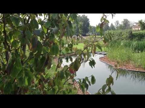 GreenArchitects   Organische zwemvijver in landelijke omgeving te Wetteren