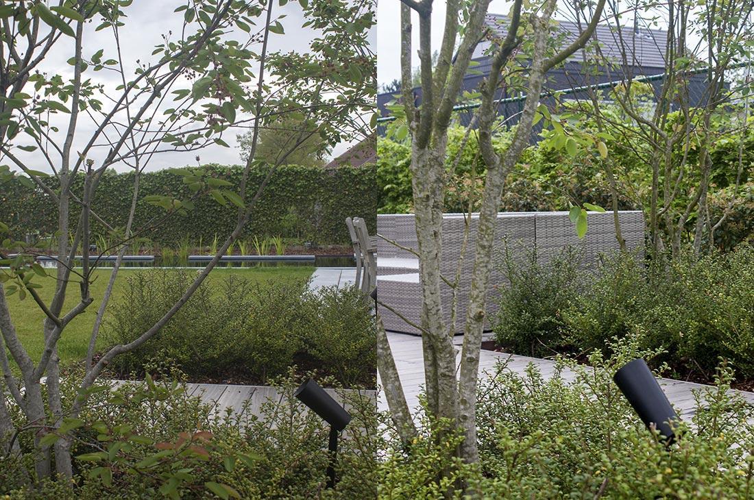 136-zwemvijver-verlichting-hout-terras-filter-meerstammig-multistem-43.jpg