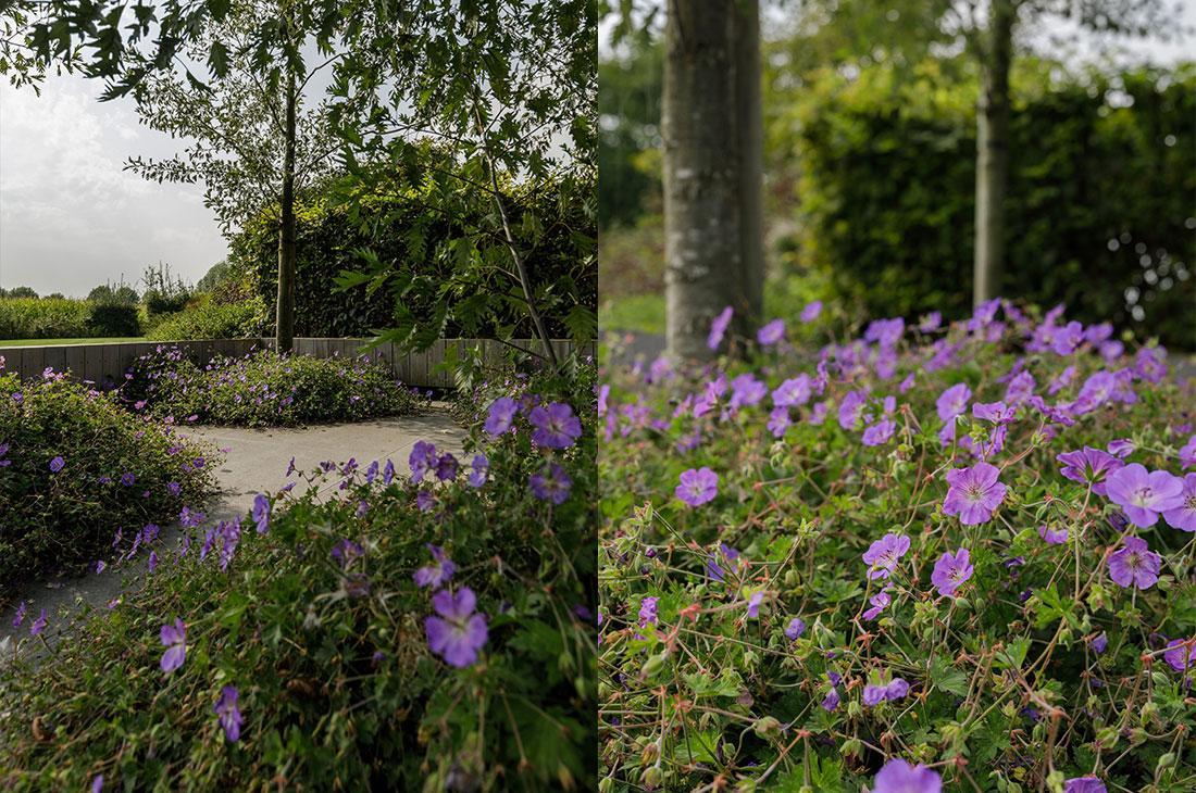 141-parktuin-vijver-water-grote-tuin-loopbrug-prairie-vasteplanten-spruyt-40.jpg