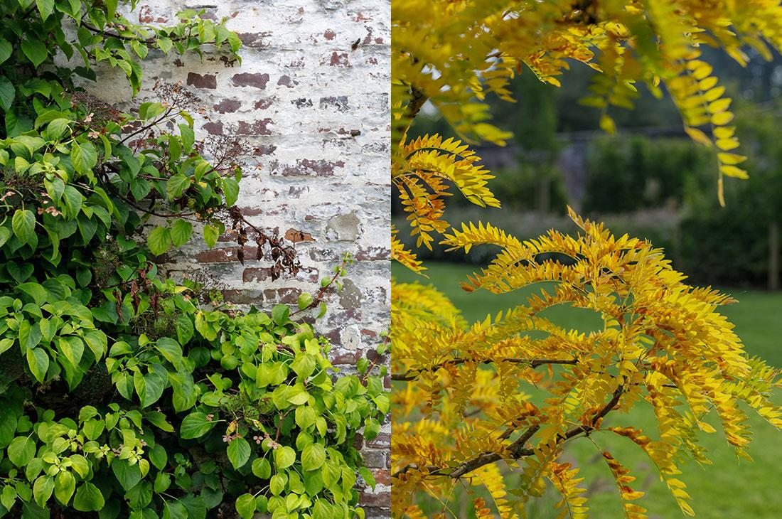 177-kasteeltuin-villatuin-multibat-topiary-carpinus-fagus-oprijlaan-natuur-natural-tuinarchitect-tuinontwerp-66.jpg