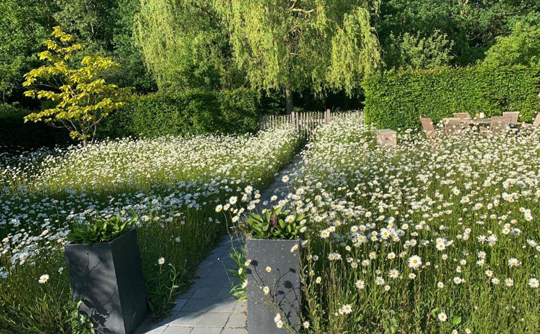 225-bloemenweide-flowers.jpg